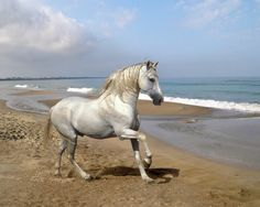 Beautiful horse pictures, white horse, black horse wallpaper are below:- beautiful white horse running beautiful HD white horse. Horse Wallpaper, Animal Wallpaper, Beach Wallpaper, Horse Photos, Horse Pictures, Beach Pictures, Beautiful Creatures, Animals Beautiful, Cavalo Wallpaper