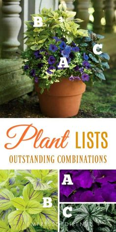 Plant lists for beautiful patio containers Image by Proven Winners gardening gardenideas planters gardencontainers plantideas empressofdirt provenwinners gardentips patiogarden containers flowers annuals gardens # Potted Plants Patio, Garden Planters, Indoor Plants, Fall Planters, Flowering Plants, Indoor Gardening Supplies, Container Gardening, Gardening Tips, Organic Gardening