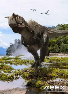 good Dino.......                                                                                                                                                                                 More