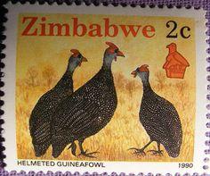 Zimbabwe 1990 - La Pintada Común, Pintada Gris o Gallina de Guinea es una especie de ave galliforme de la familia Numididae. Es la más extendida de las pintadas; originaria de África, ha sido introducida en las Antillas Menores y en el sur de Francia