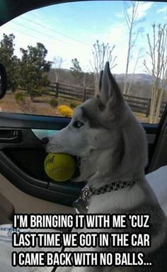 Too Funny funny animals, balls, funny dogs, funny stories, funny pictures, pet, funni, puppi, dog humor
