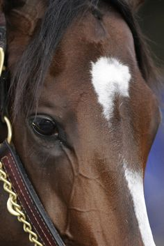 Rachel Alexandra - may she recover fully from her foaling injury...