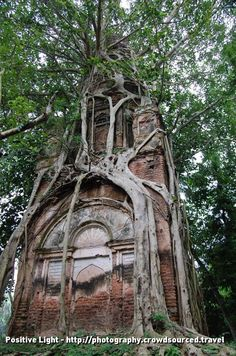 Temple Bo Tree by Renee Pepmiller Bangladesh