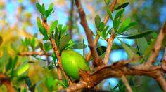 Natur- & Alternativheilmittel Wacholderbeere ätherisches Öl Natural Für Aromatherapie Hautpflege & Haarpflege Finely Processed