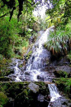 Biotopo el Quetzal,Guatemala.