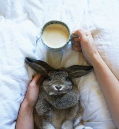 Tilvie the bunny of ceramicist Katia Carletti. Taken from the IN BED Journal