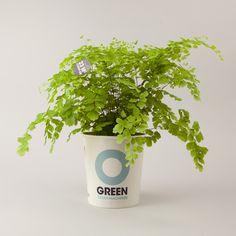 Green clean machine