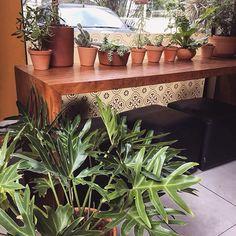 Amanhã a Pão Prosa, esse lugarzinho tão aconchegante e cheio de amor retoma as atividades! 🌿 Quem quer pão quentinho? Chega mais que tem plantinhas nossas espalhadas lá por todos os lugares!!! 🌿🌿 #junglelife #urbanjungle #gardening #jungalowstyle #plants #plantslover