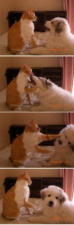 #neko #cat #dog