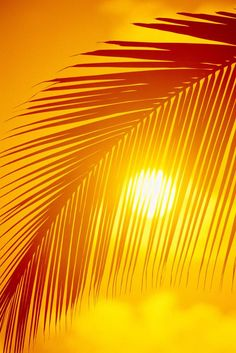 Happy Sunny Day! Loving the sun shining through the palm tree.