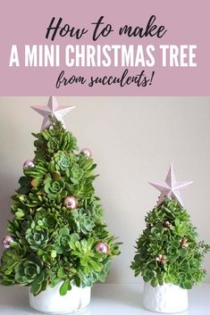 Make a mini succulent Christmas tree with our step-by-step guide! Cheap to buy and virturally indestructable succulents are the ultimate plants for some DIY Christmas gardening Christmas Garden Decorations, Christmas Plants, Hanging Christmas Lights, Miniature Christmas Trees, Mini Christmas Tree, Cheap Christmas, Decorating With Christmas Lights, Christmas 2019, Xmas
