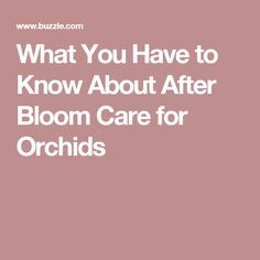 What You Have to Know About After Bloom Care for Orchids