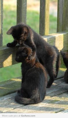 The brotherhood. Sweet kittens obviously part of the same litter. Black cats bring good luck & love. <3 <3 <3