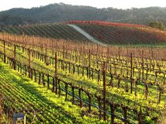 Tablas Creek Vineyard - Paso Robles, CA