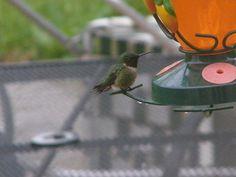 Nice Hummingbird Feeder Food photos