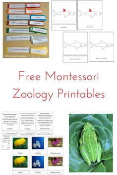 Elementary Observations: Zoology - Roundup of free materials for lessons, extensions, activities and exploration Montessori Science, Montessori Homeschool, Montessori Elementary, Montessori Classroom, Montessori Toddler, Science Classroom, Science Activities, Elementary Schools, Homeschooling