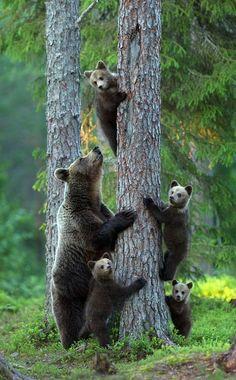family<3<3<3<3