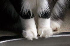 -J'adore ces touffes de poils entre les orteils !  -I love these tufts between the toes!