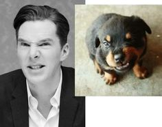 I don't know who's cuter, Benedict or the puppy???