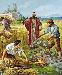 Perumpamaan Tentang Lalang di Antara Gandum (Matius 13: 24-30 + 36-43)   Khotbah dan Renungan Kristen