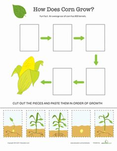 Kids follow corn as it grows from seed to vegetable on this simple cut-and-paste growth chart.