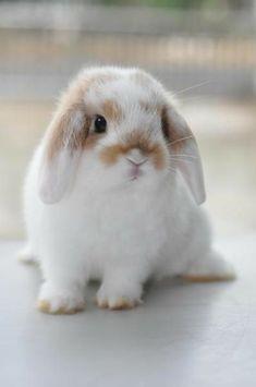 Hello my new friend - modernbathroom - Pet bunny - # rabbit # animals # rabbit . - Hello my new friend – modernbathroom – Pet bunny – # animals knitting - Cute Bunny Pictures, Baby Animals Pictures, Cute Little Animals, Cute Funny Animals, Cute Pets, Lop Eared Bunny, Rabbit Breeds, Cute Baby Bunnies, Mini Lop Bunnies