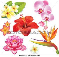 set, van, tropische bloemen Bekijk Grotere Illustratie