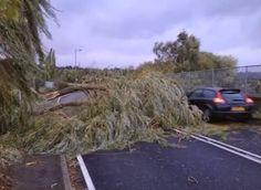 Tree removals on roadside