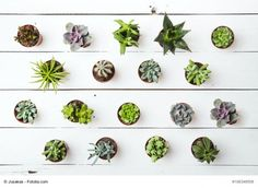Floral pattern. Succulents. Background.