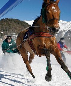 6-61055-skijoring-1390869965.jpg (500×610)
