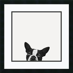 Jon Bertelli 'Loyalty' Framed Art Print 22 x 22-inch ($110) ❤ liked on Polyvore featuring home, home decor, wall art, black, black white wall art, black wall art, black and white framed wall art, black white home decor and dog home decor