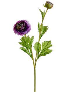 Purple Ranunculus | Purple Wedding Flowers | Afloral.com