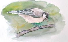 Tutoriel présent dans le Club Aquarelle : un oiseau Club, Bird, Animals, Easy Watercolor, Watercolor Painting, Watercolour Paintings, Animais, Animales, Animaux