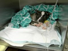 PHOTO: This adorable four-month puppy pictured in this undated photo was found beaten and buried alive by Augusta Animal Services in Georgia.