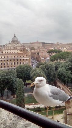 Čajka nad Rímom