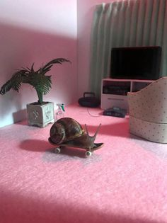 Two Artists Create Miniature World Where Snails Are The Main Actors - World's largest collection of cat memes and other animals Baby Animals, Funny Animals, Cute Animals, Animal Memes, Pet Snails, Pet Frogs, Cute Creatures, Wall Collage, Just In Case