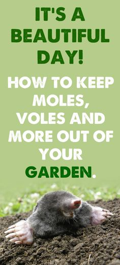 Voles Moles How To Get Rid Of Them Mole Gardens And Yards