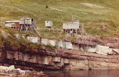 Newfoundland, Labrador, Pictures, Photos, Photo Illustration, Labradors, Labrador Retriever, Labs, Lab