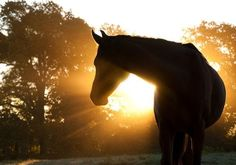 Pure Horse Sense   3 Reasons Why an Equestrian Makes a Great Employee