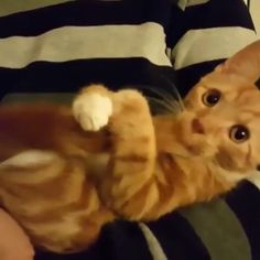 Cute Baby Cats, Funny Cute Cats, Cute Little Animals, Cute Cats And Kittens, Cute Funny Animals, Kittens Cutest, Baby Dogs, Big Cats, Funny Animal Memes