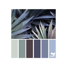 design seeds | search | for all who ♥ color ❤ liked on Polyvore featuring backgrounds and color scheme