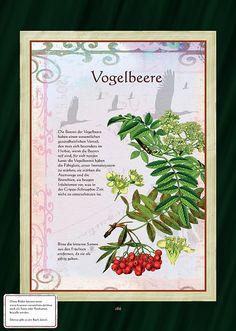 Hirtentäschel - Hirtentäscheltee - New Ideas Healing Herbs, Medicinal Plants, Natural Healing, Home Greenhouse, Greenhouse Gardening, Herbal Witch, Winter Party Themes, All About Plants, Pallets Garden