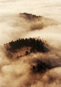 Morning fog...