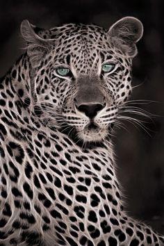 Fractalis Leopard by Rudi Hulshof, via 500px