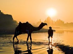 Picture of a man and camel wading in the Yamuna River in India