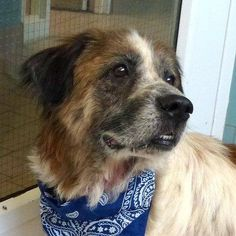 #FOUNDDOG #VALLEYVIEW #OH 7 Year old male #Collie Mix Flea Allergies Kennel 12 Cuyahoga County Animal Shelter 9500 Sweet Valley Dr 216-525-4827 RESCUE ME OHIO