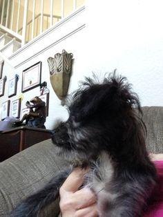 Pup Bentley at his new home