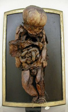 Process of natural mummification found in a Renaissance tomb