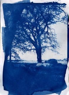 12 Months, 12 Projects: August - Cyanotype · Lomography