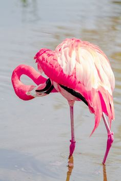 Pink flamingo - a real one not a plastic one!